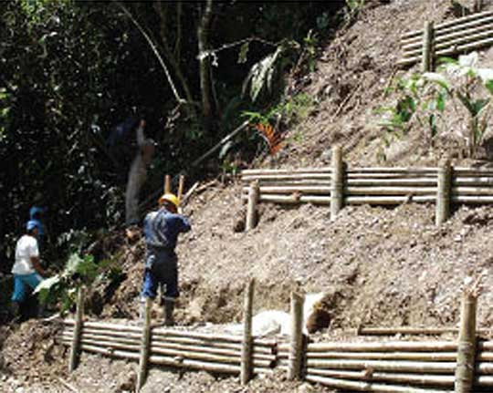 Control of soil erosion with local bamboo