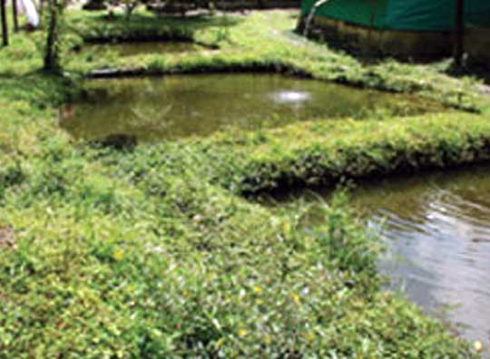 Vermiculture project